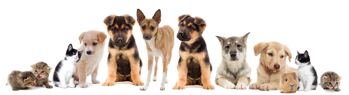 buy pets in Jacksonville, FL Jacksonville, FL pet stores, buy puppies, kittens, dog food, birds, reptiles. Pet stores in Jacksonville, FL