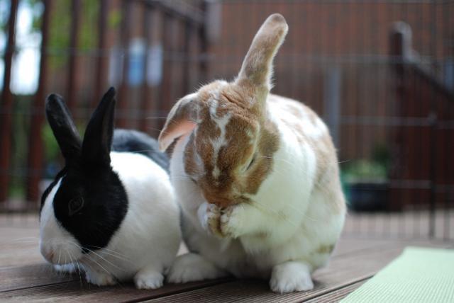 buy bunnies in Jacksonville, FL